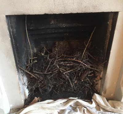 Bird Nest Removal South West - Complete Sweep
